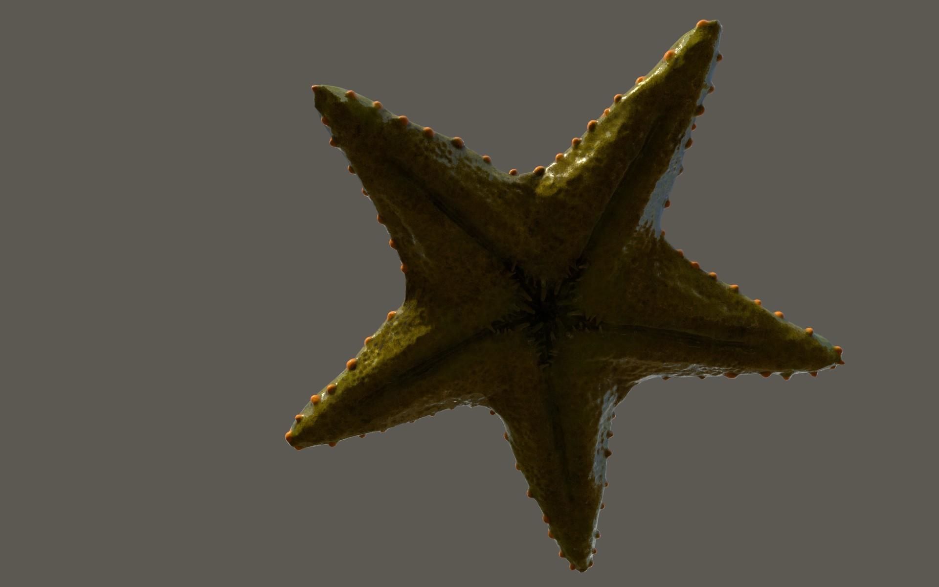 Matej chalachan starfish mat2