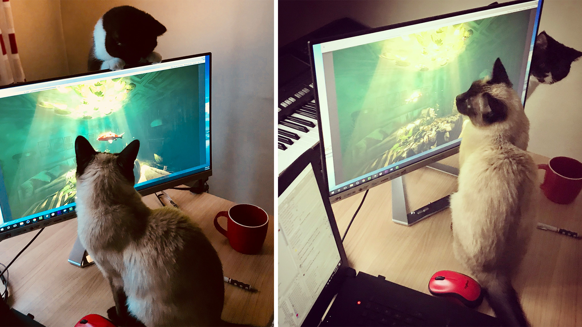 Fish animation quality control team!