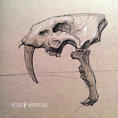 Peter kapritsias sketch sabertooth skull
