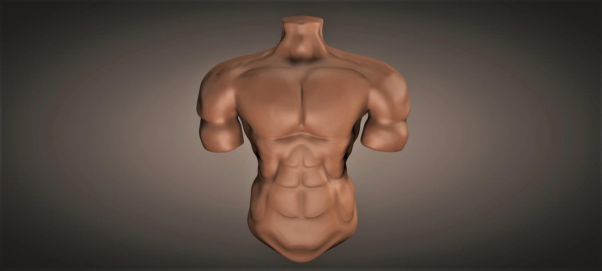 Viviana alvarado torso masculino