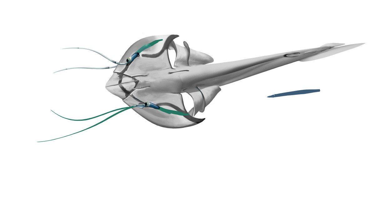 More stingray-like concept, with broad head shield and sensory antennae