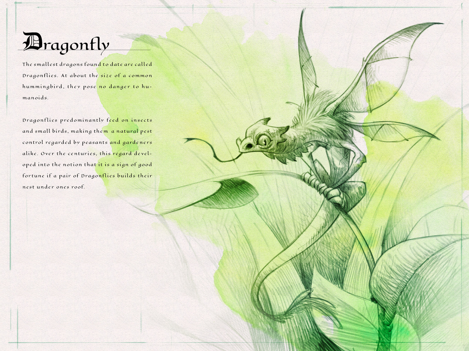 Page one of the  Dragon Compendium showing and describing the Dragonfly