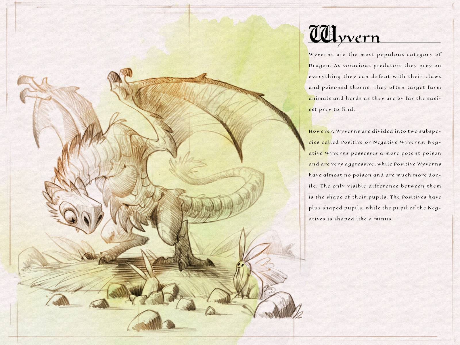 Page one of the  Dragon Compendium showing and describing the Wyvern