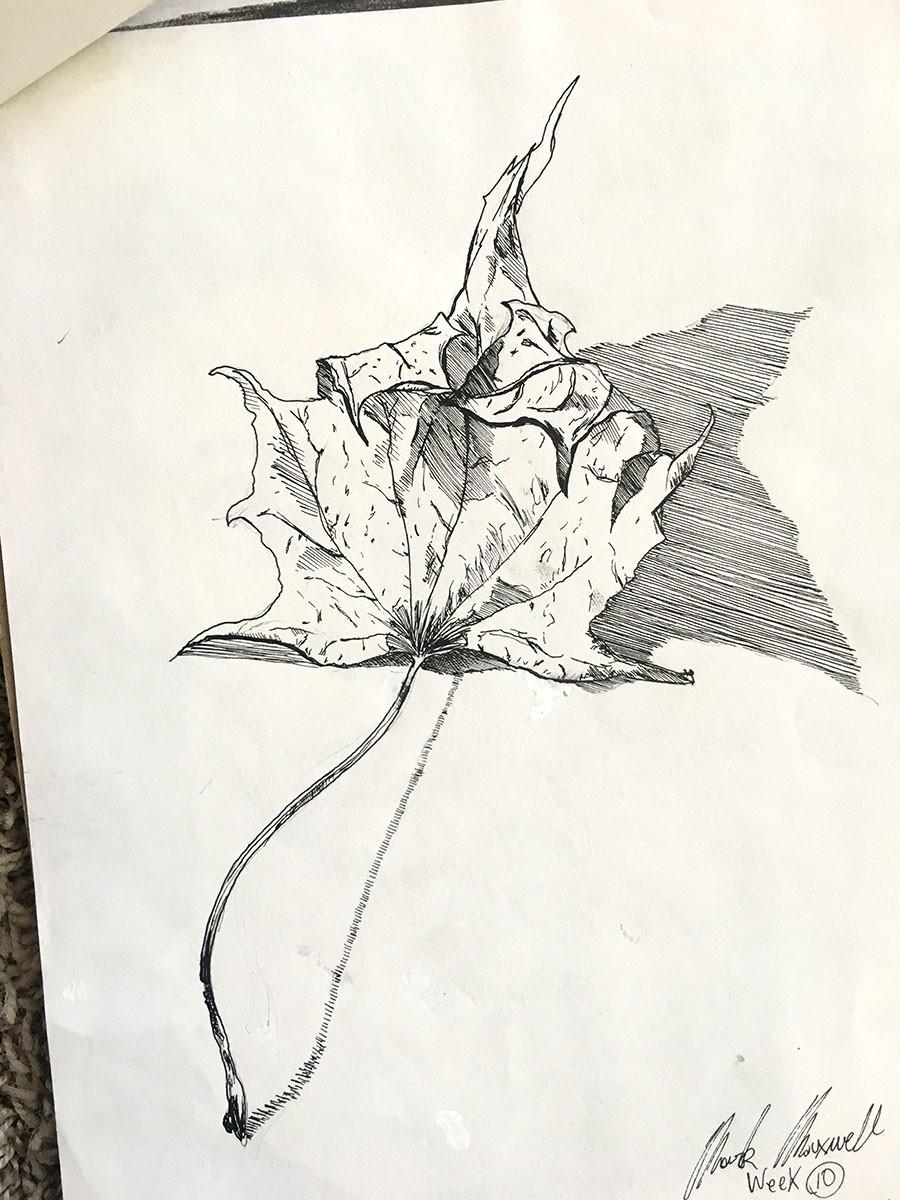 "8"" x 10"" sketchbook study of a leaf."
