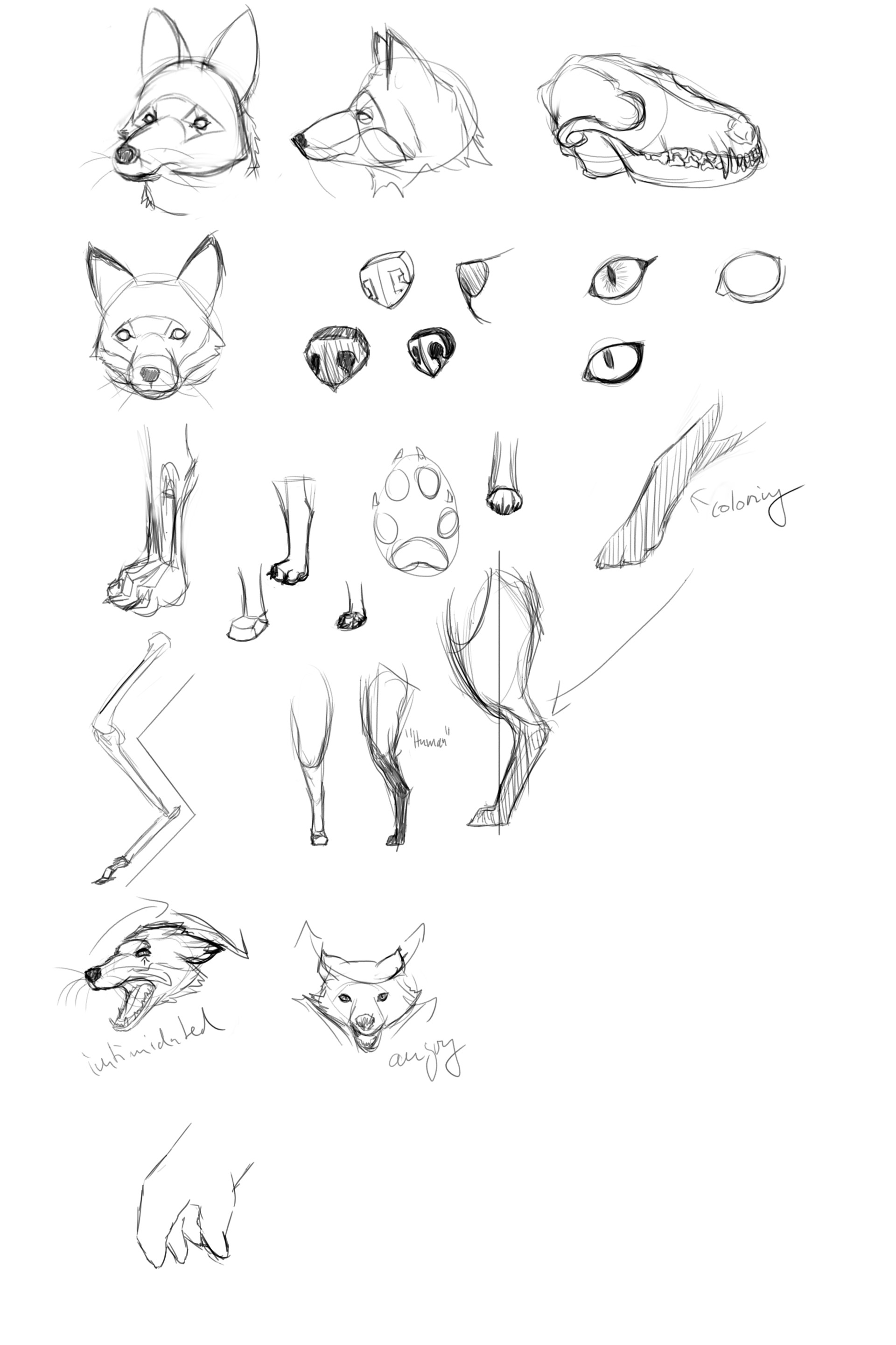 One of the cleaner examples of me tackling fox anatomy.