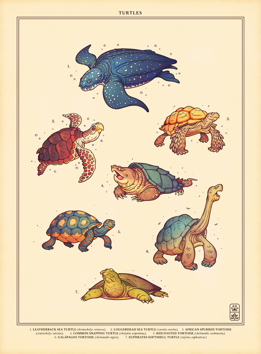 Jonatan iversen ejve turtles1