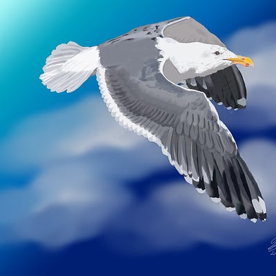 Andre smith seagull1