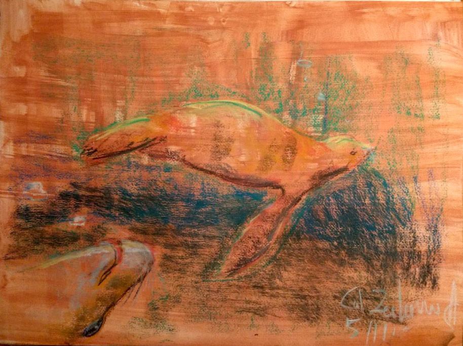Agnes swart californische zeeleeuw