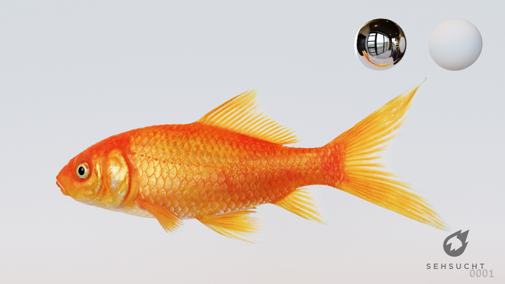 Thure koch goldfish 000