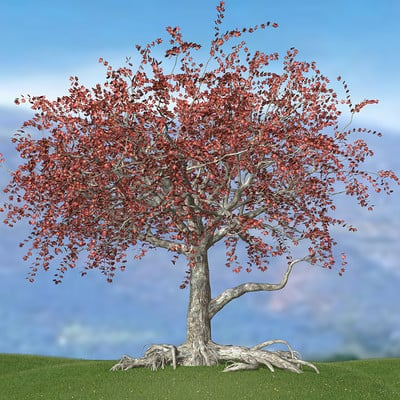 Nicolas tobot arbre tobs