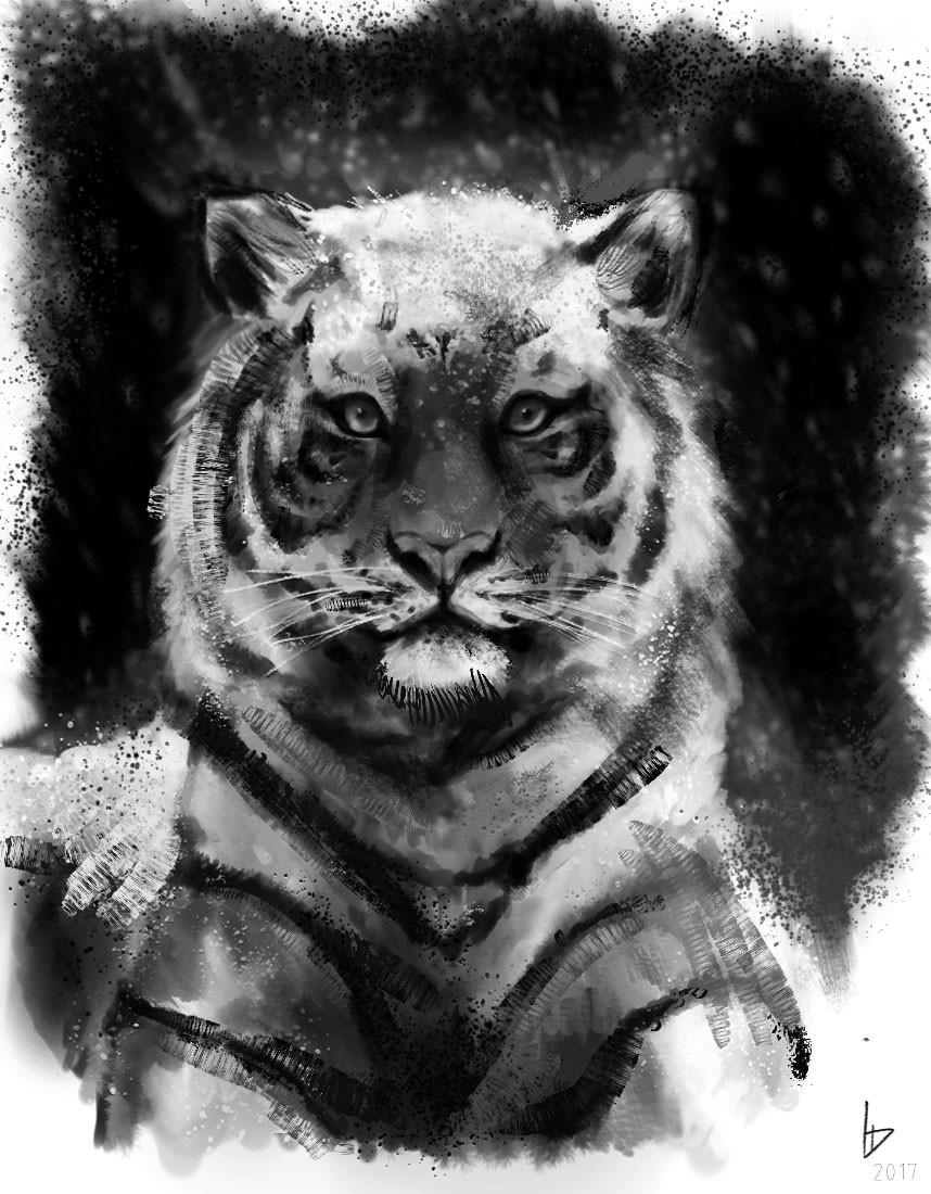 Damien levaufre tigre 2 1