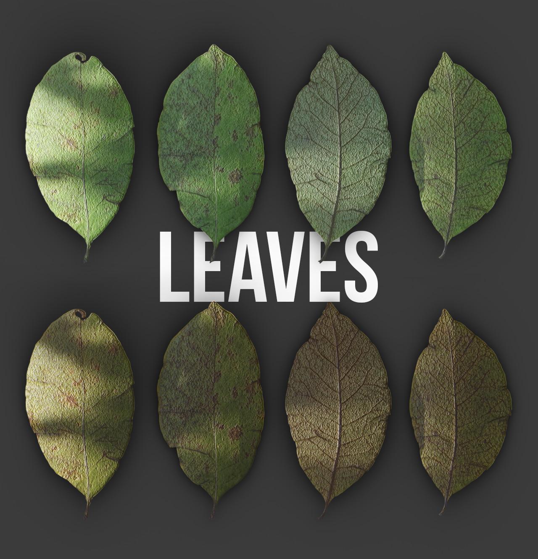 Ravissen carpenen leaves test render processed