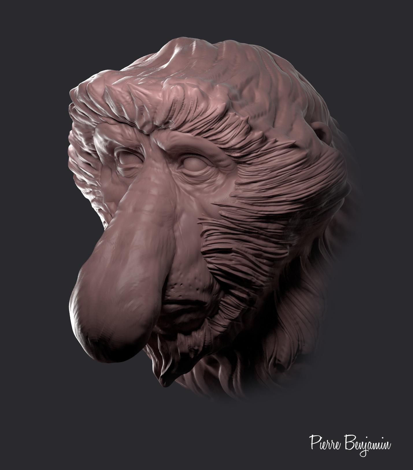 Pierre benjamin proboscis monkey 000100