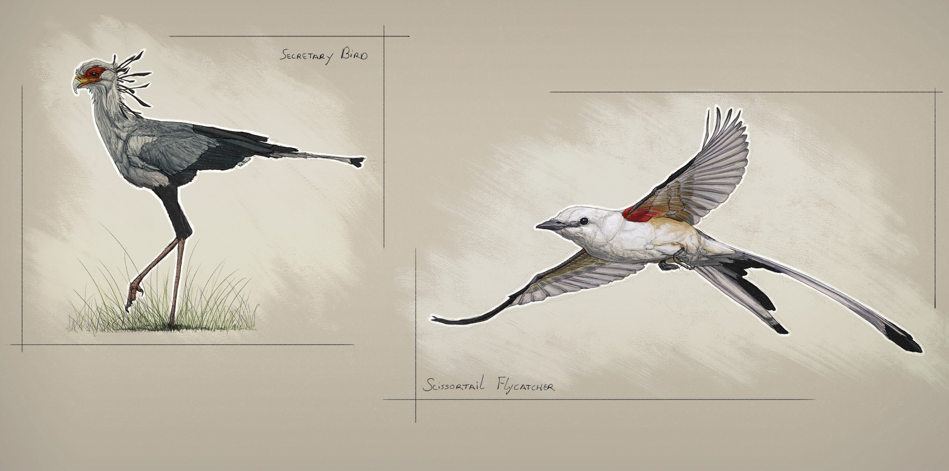 Jordi van hees lesson 3 animal observational sketches 1