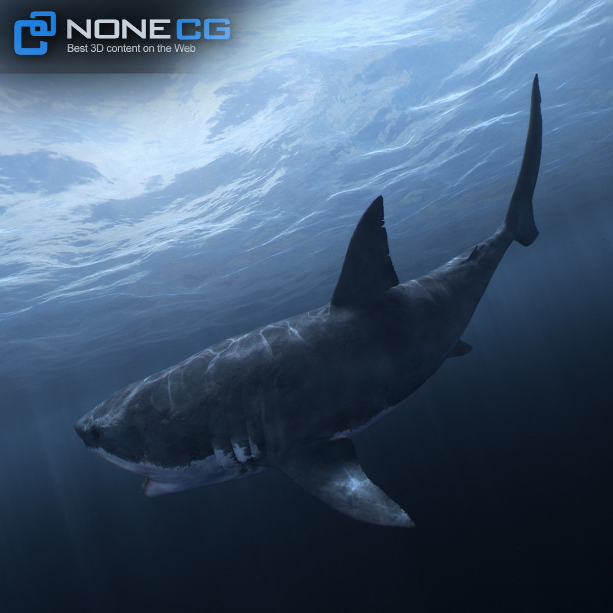 3D Great White Shark by NoneCG