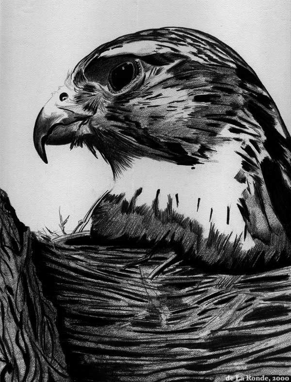 Personal Artwork Coquille Paper Black pen, Black Prismacolor pencil