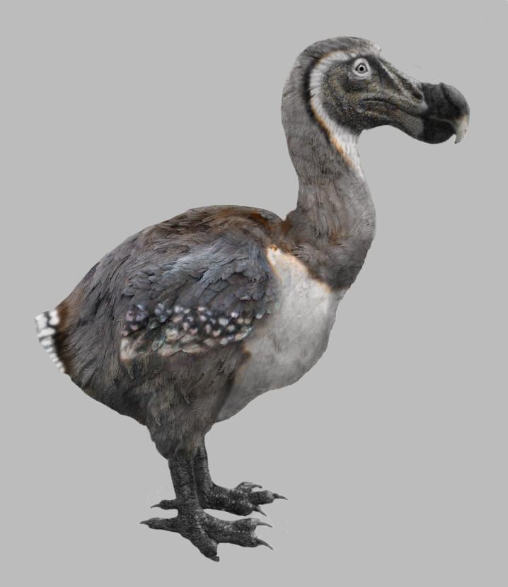 Daren horley dodo2