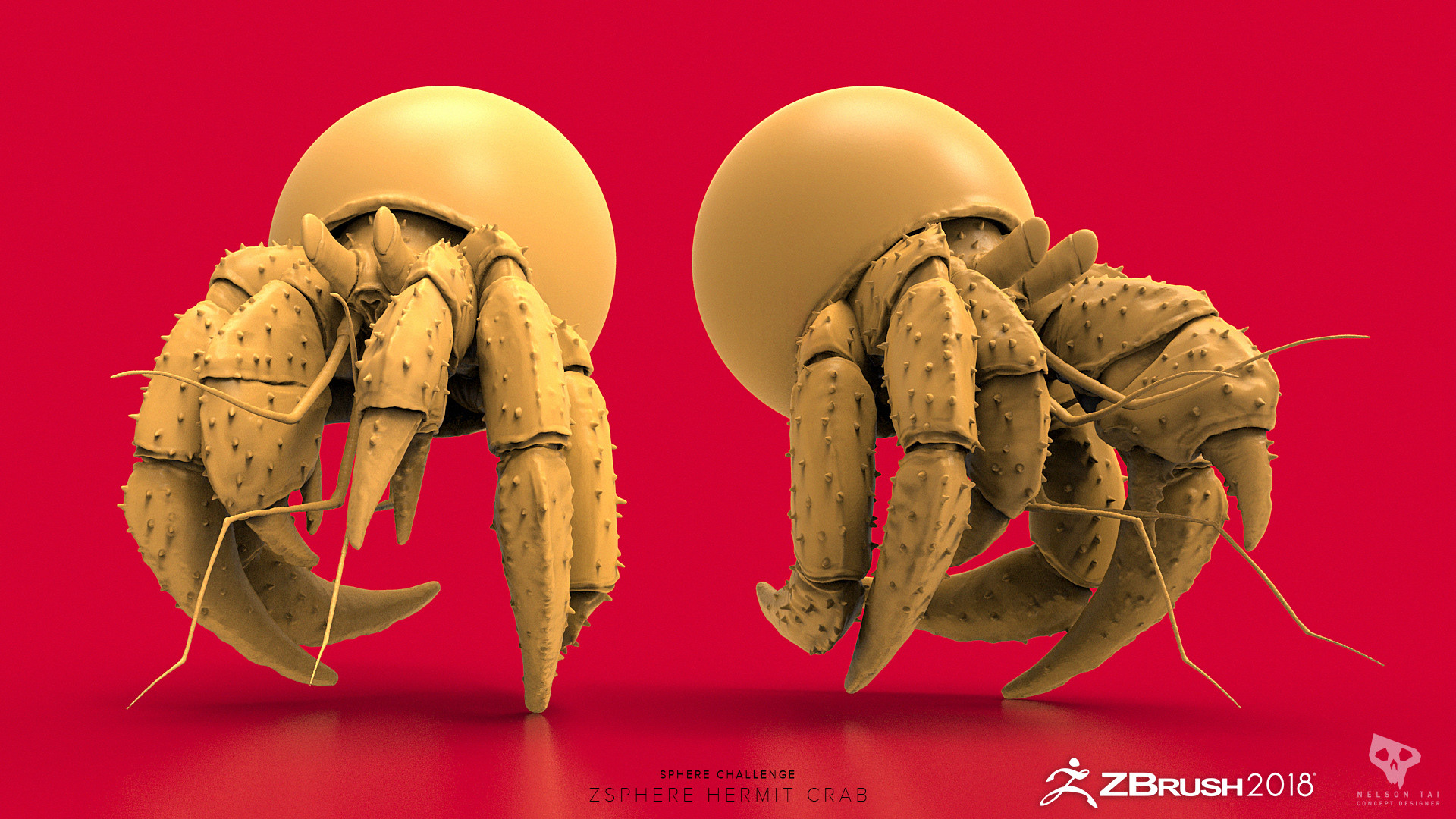 Hermit crab living inside the ZSphere!