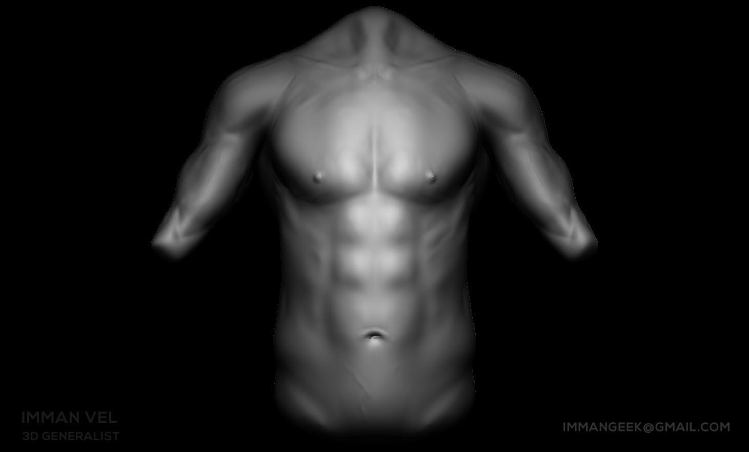 Imman Vel - Male Torso Anatomy