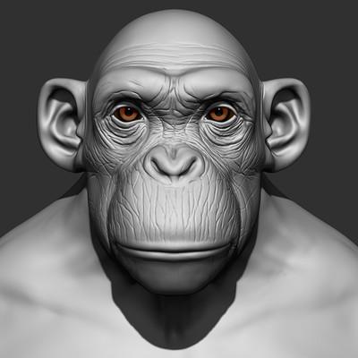 Dimax esteban araujo chimp0