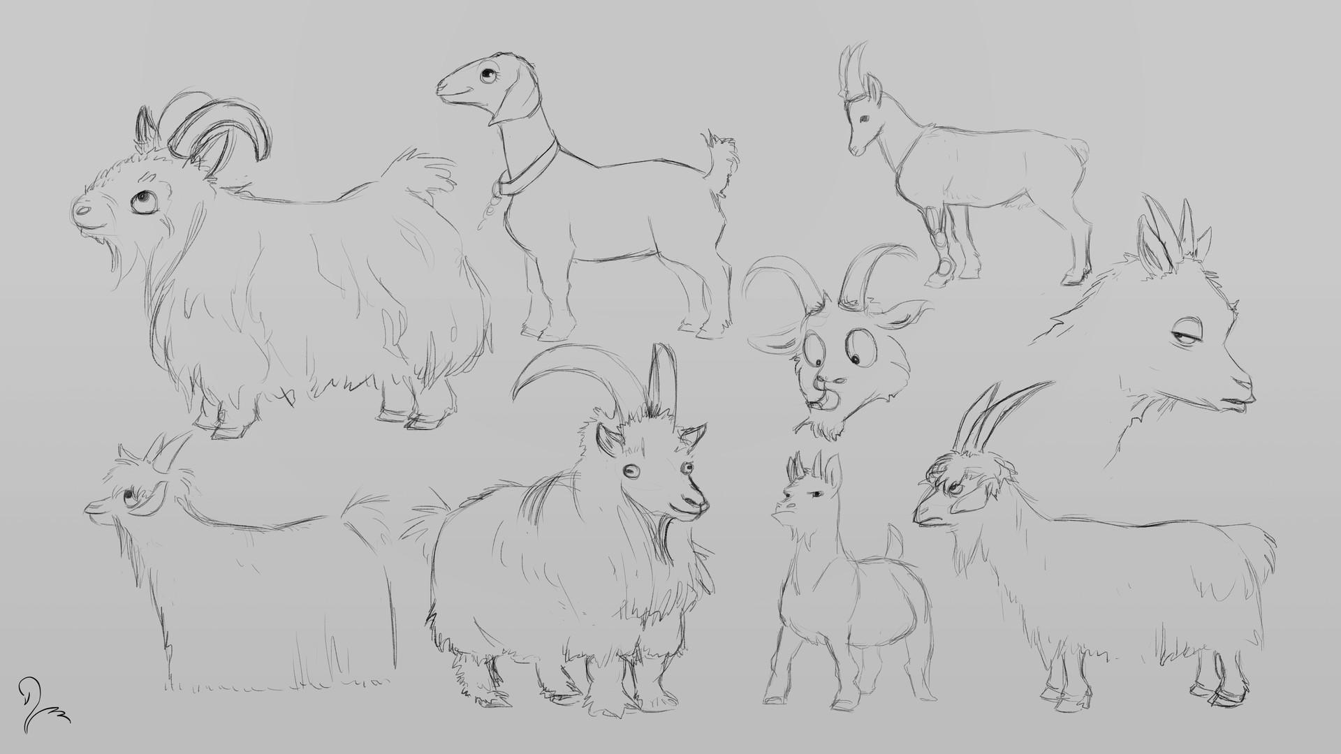 Victoria march goat studies