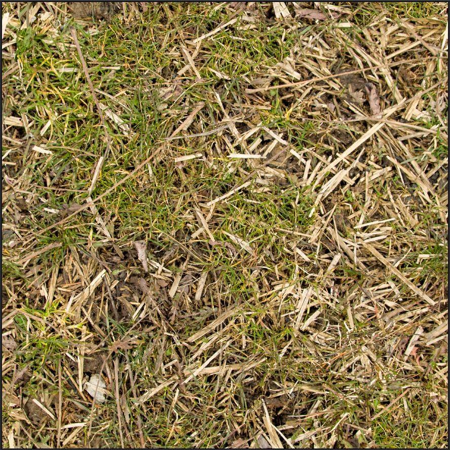 Dave riganelli grass5