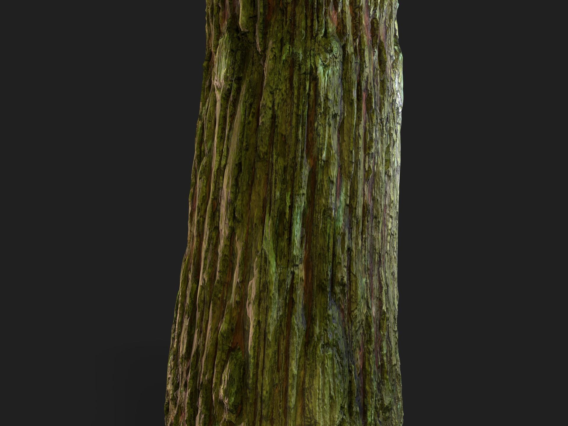 Martin pietras bark 02