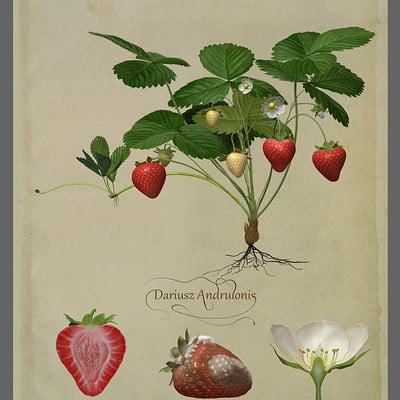 Dariusz andrulonis 01 starwberry