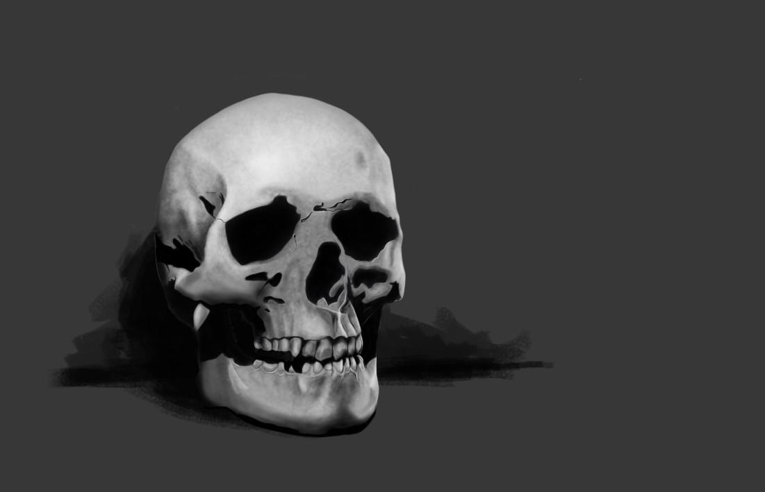 Anatomy / Skull Study