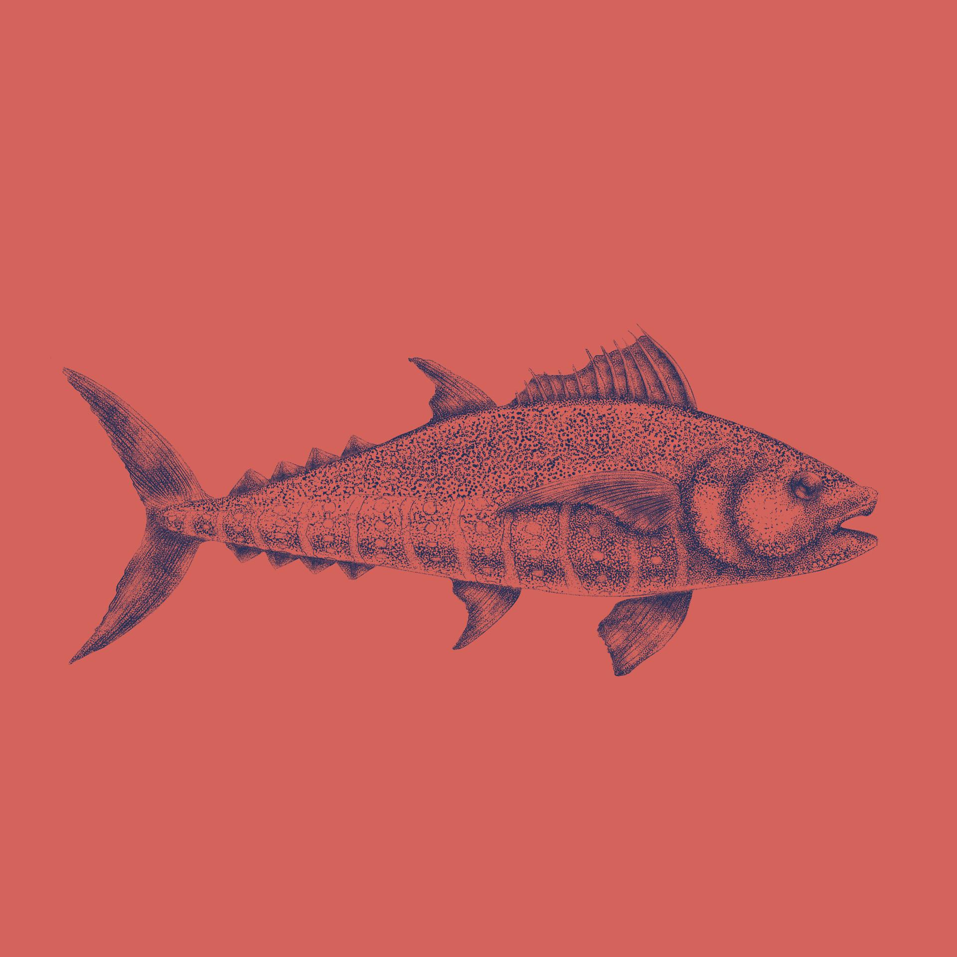 Marcos torres todos insta atum