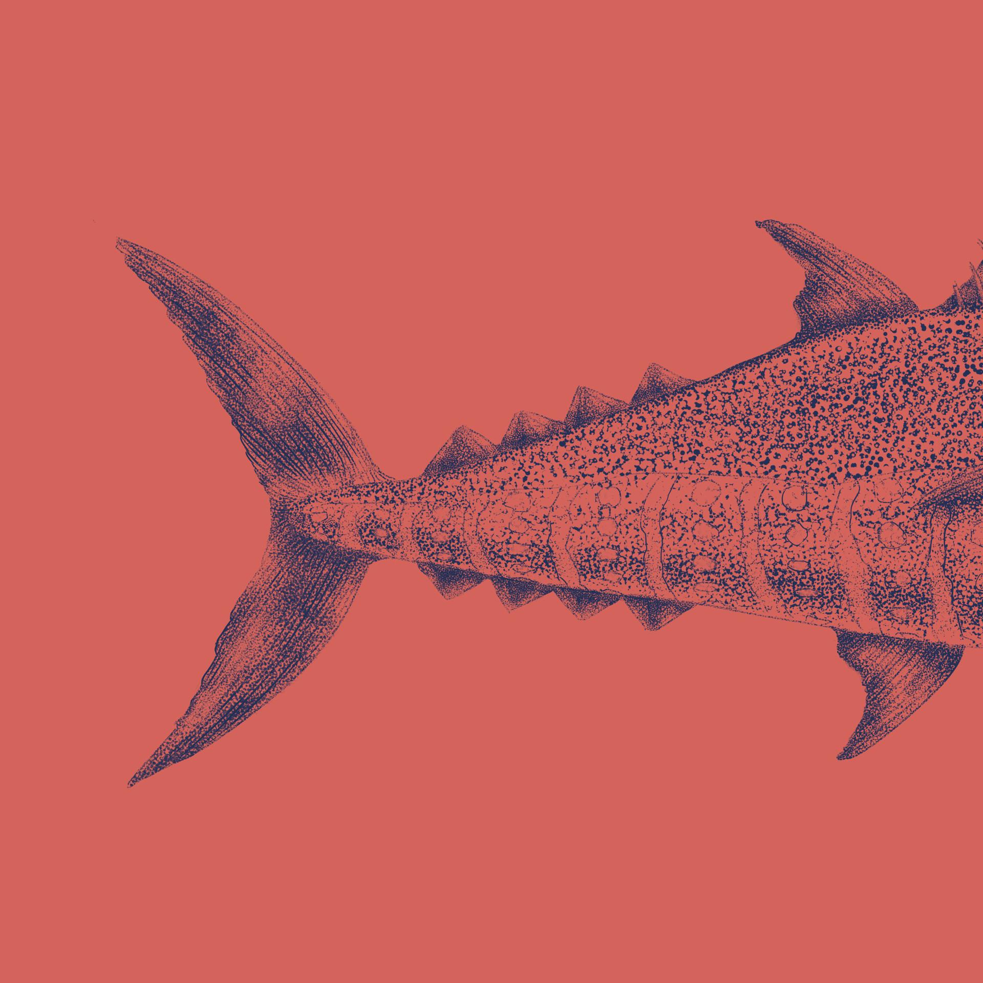 Marcos torres todos insta atum2