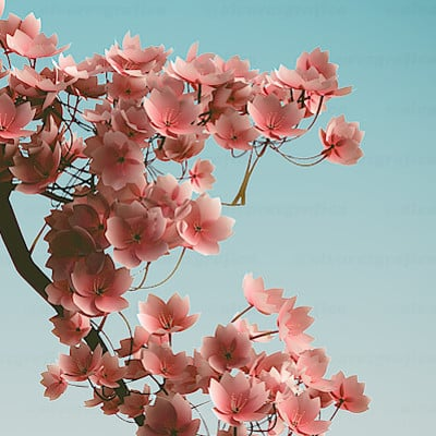 Anyela alvarez cherry web