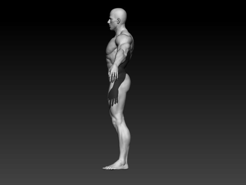 Elmo elbadry male anatomy side view