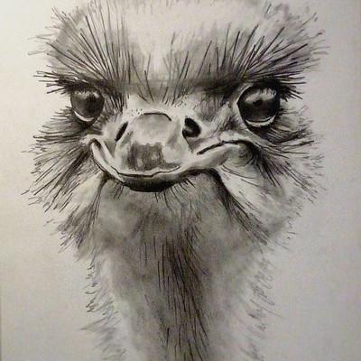 Laura green b ostrich 2