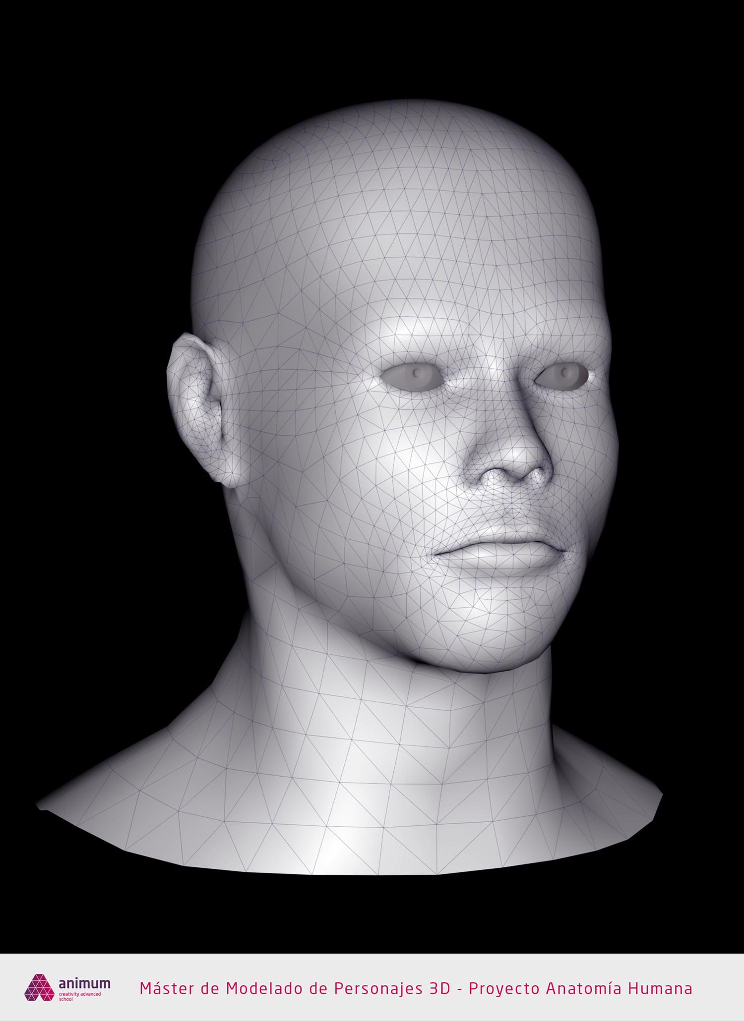 Eusebio hb humano cabeza wire1