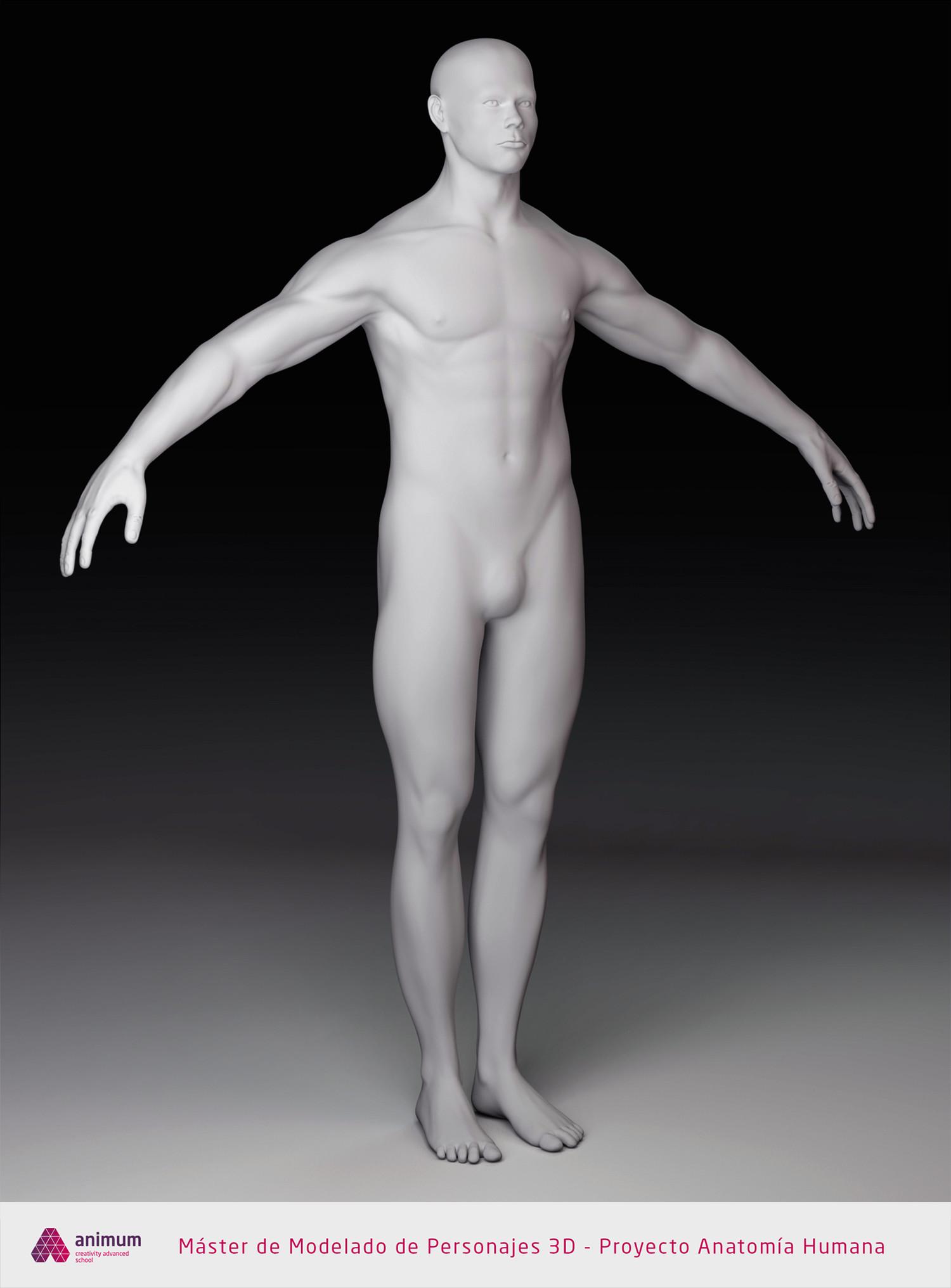 Eusebio hb humano cuerpo shaded1