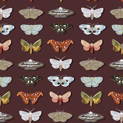 Aline dutra moths