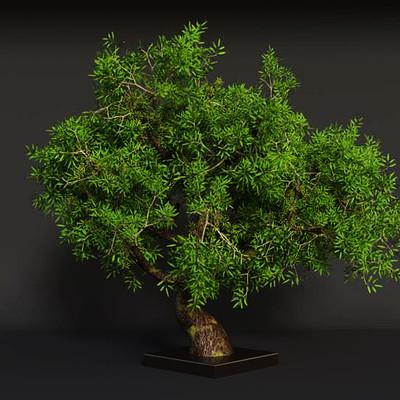Subhash s simon little tree