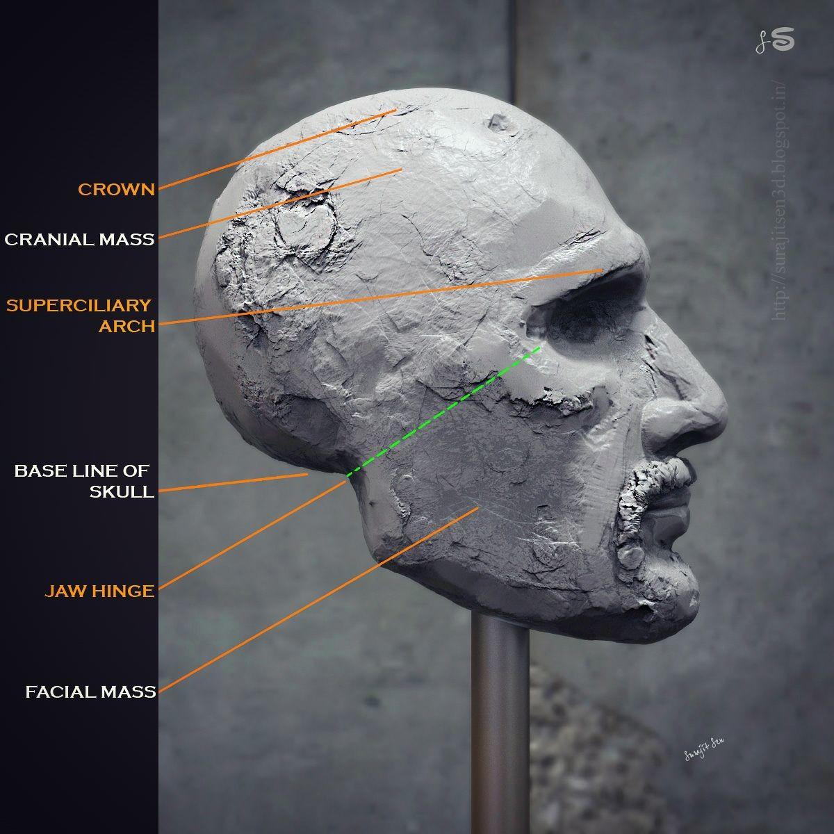 #humanheadrsculpture #study #anatomy  My free time study Base line of human head. Wish to share.