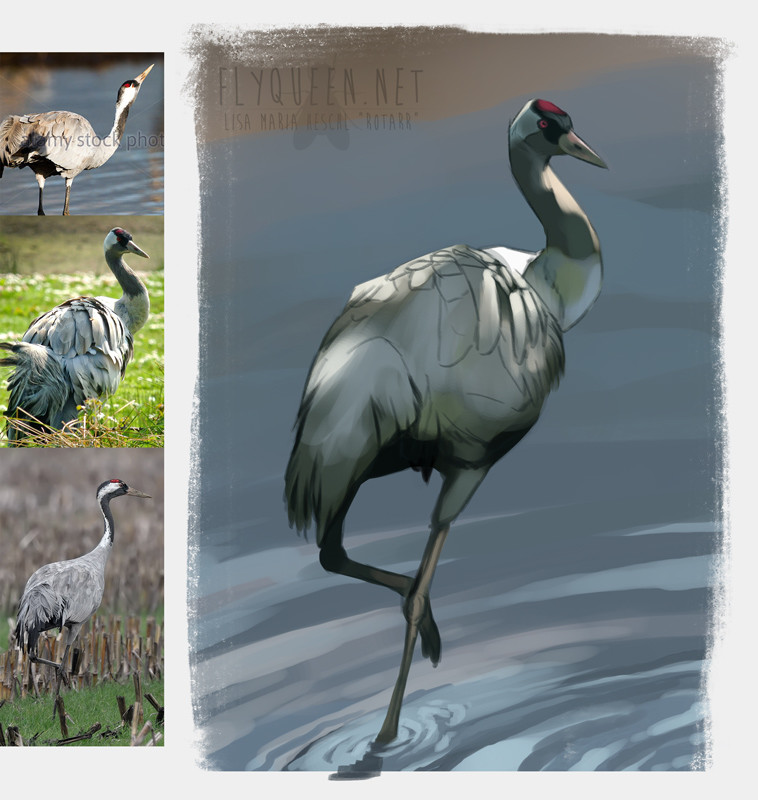 Lisa heschl 180223 commoncrane