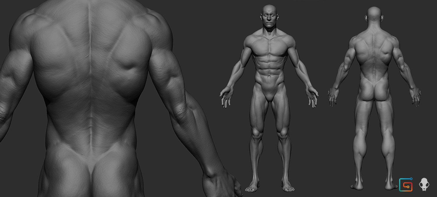 Andrew Ariza - Male Anatomy Model