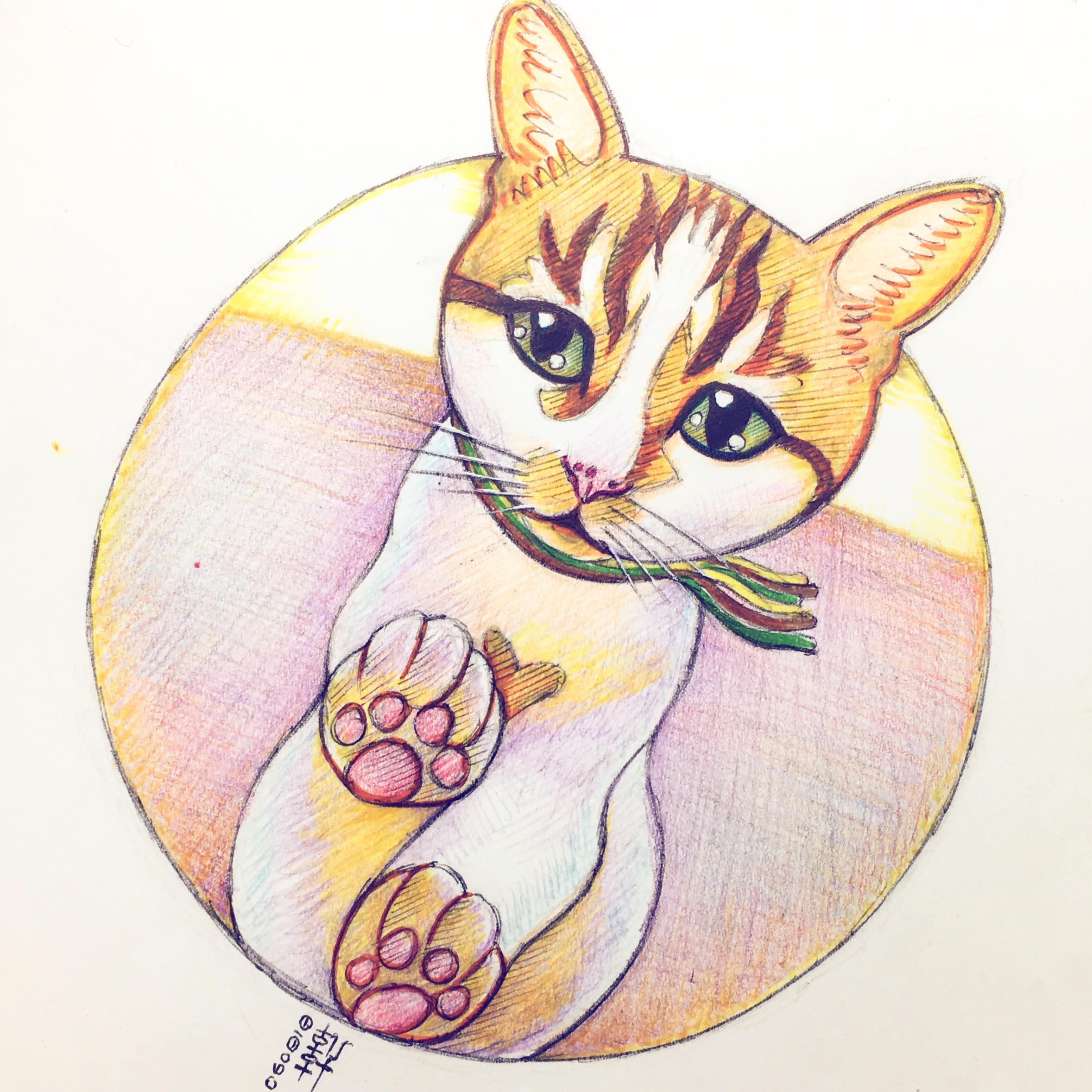 Day 06-08-18 - I Missed U Cat