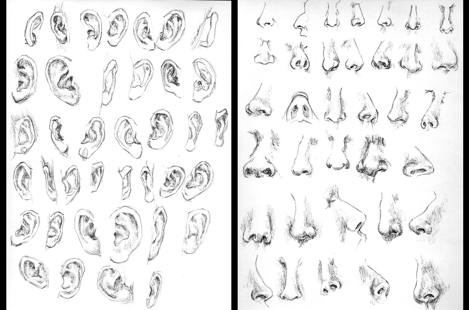 Anatomy practice - Ears and Noses