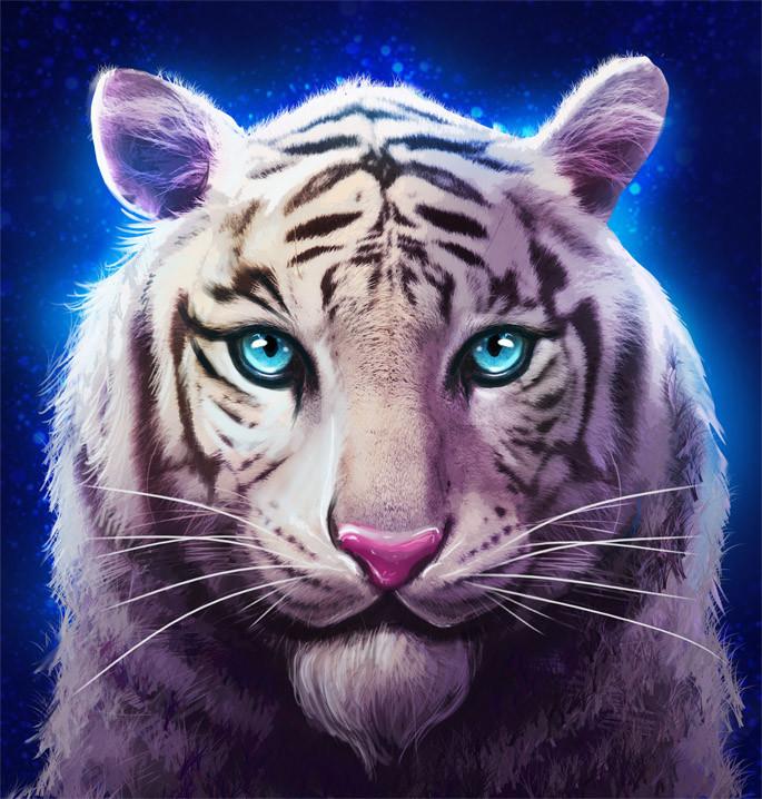 Justin krasuckas tiger