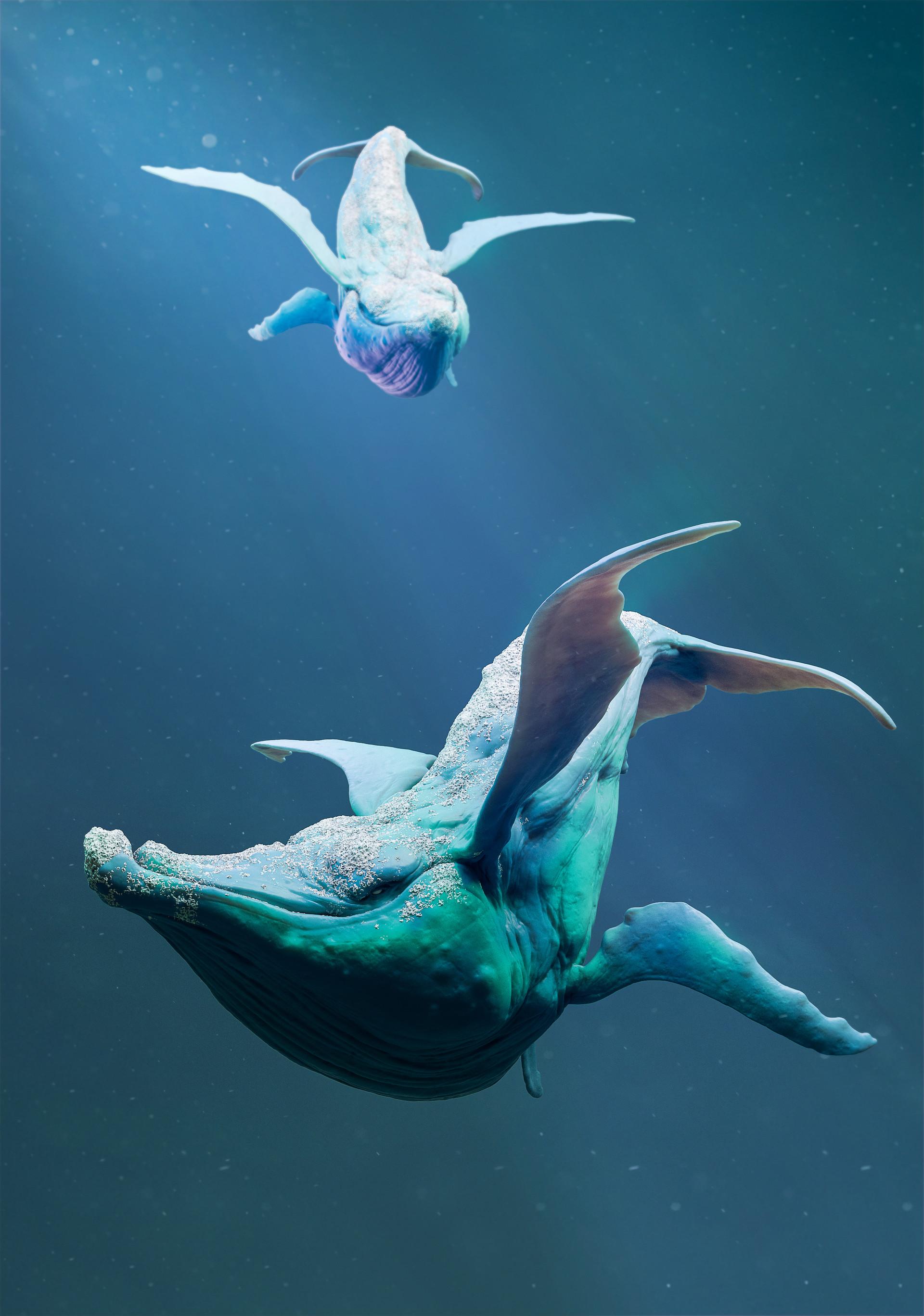 Mickael lelievre whale