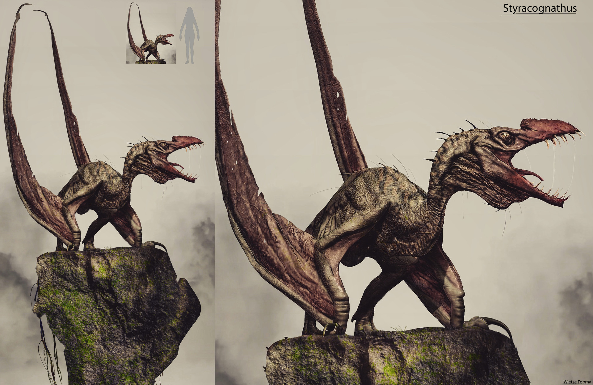 Wietze fopma styracognathus
