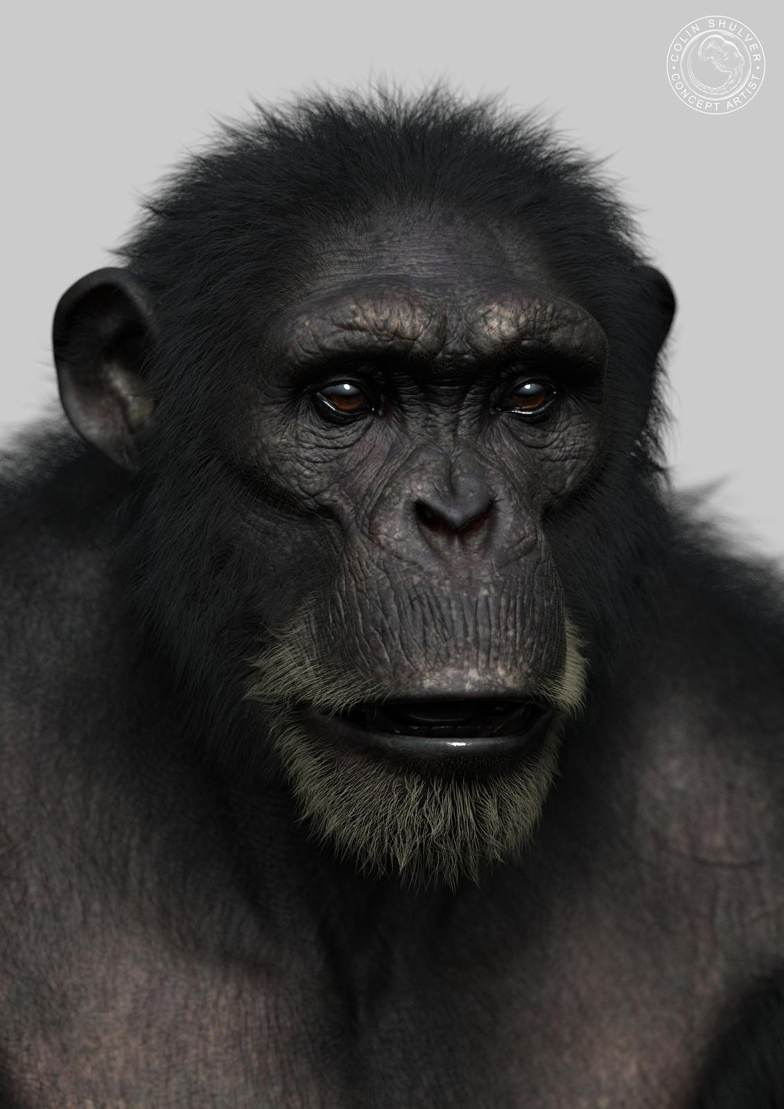 Chimpanzee - Part 2