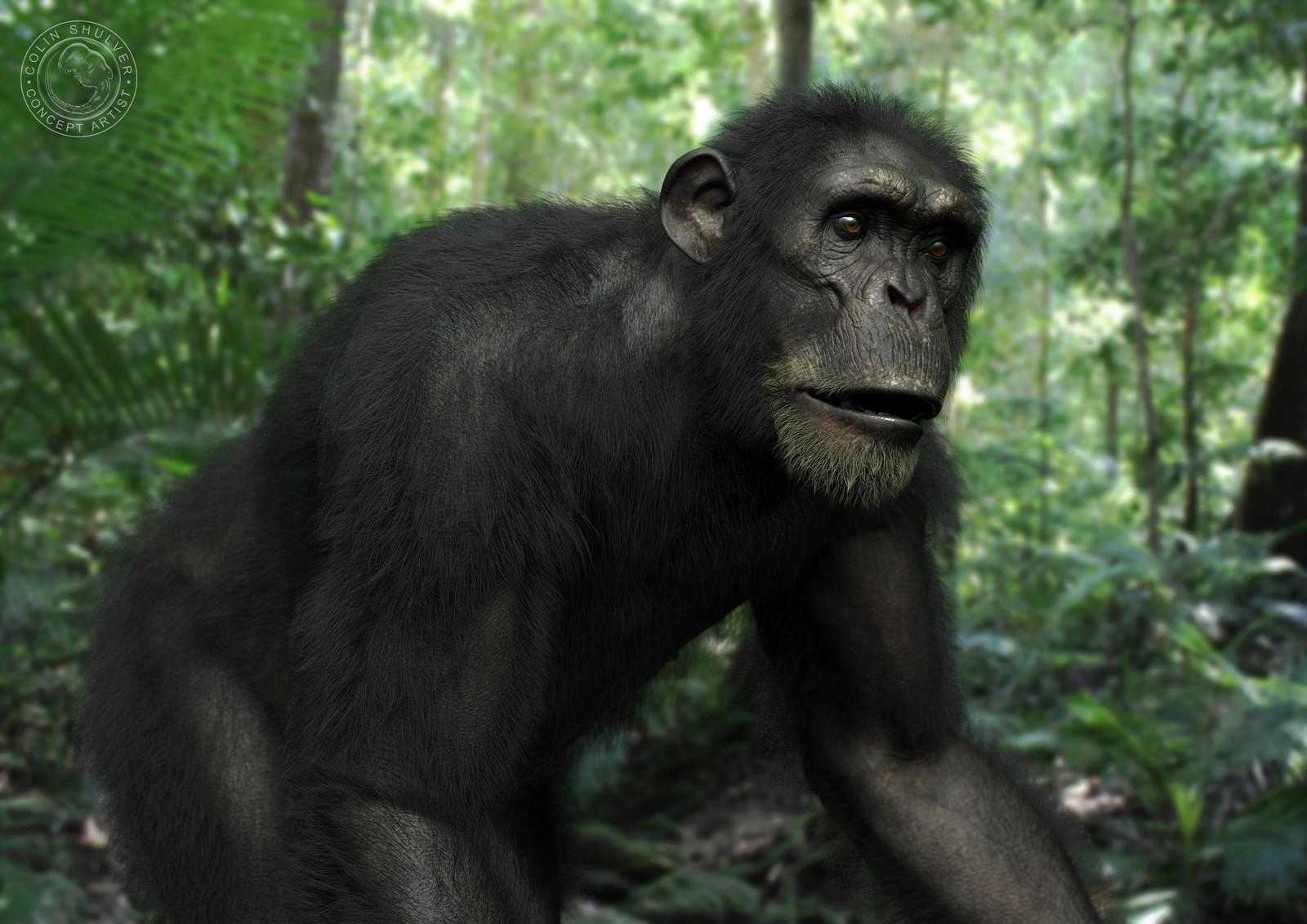 Chimpanzee - Part 3
