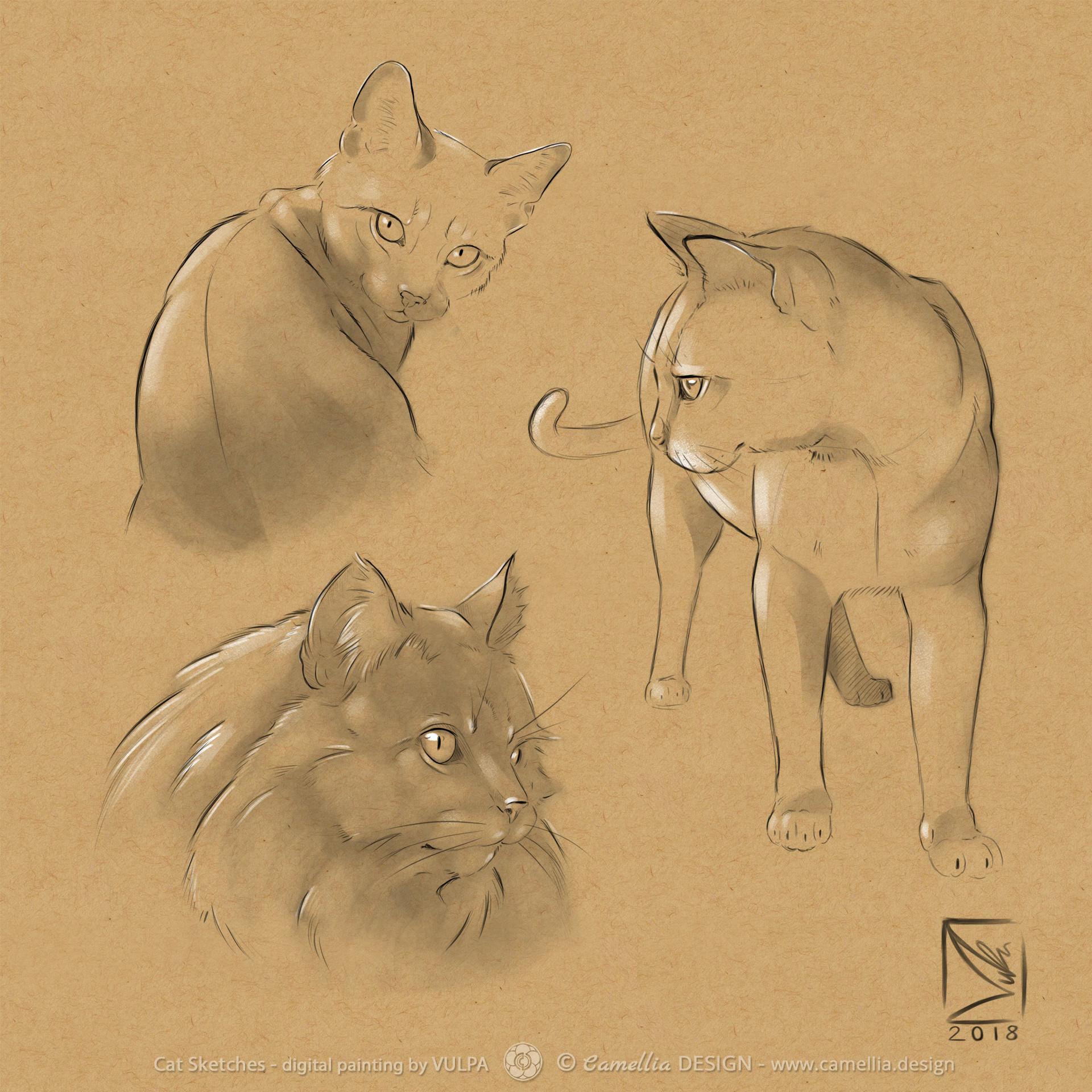 artstation cat sketches vulpa art