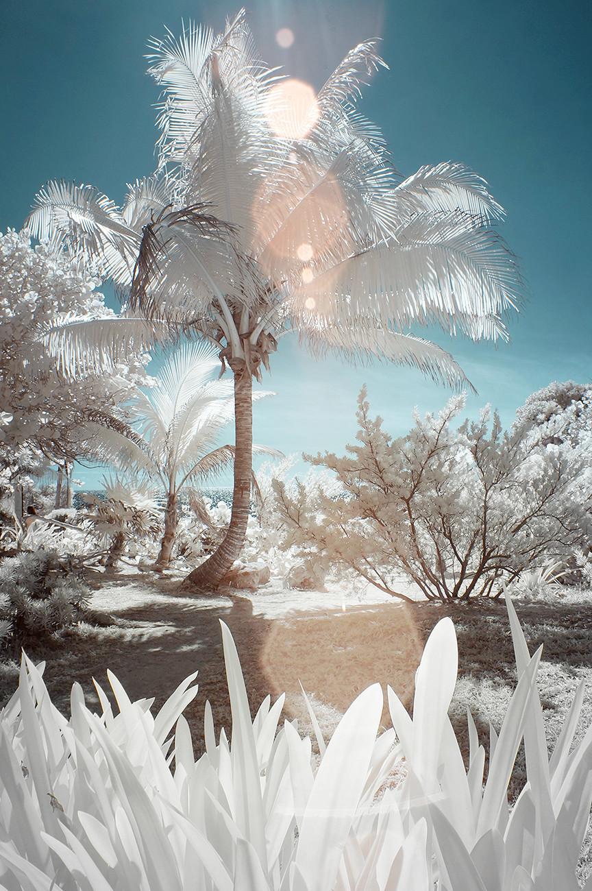 Tulum, infrared, 2014.